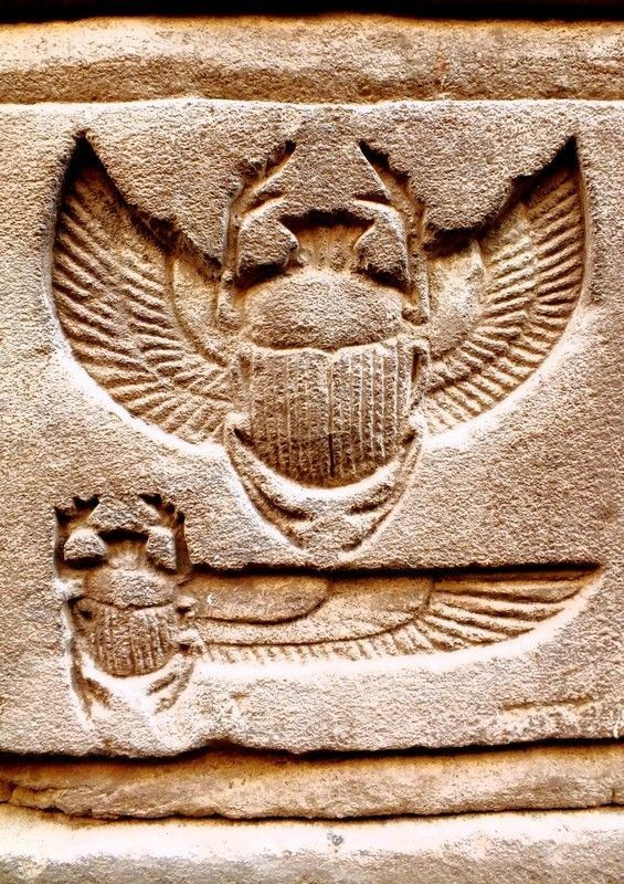 Scarab  Egypt